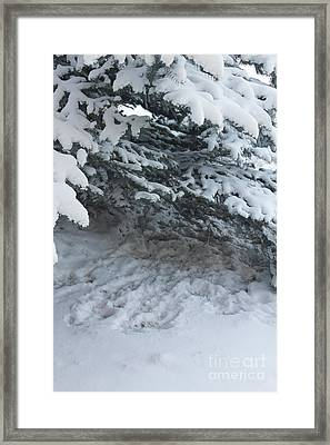 Hungarian Partridge Resting Place Framed Print by Donna Munro