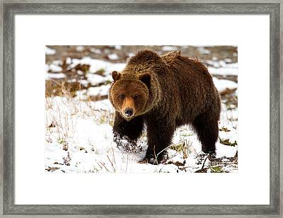 Framed Print featuring the photograph Hungry by Aaron Whittemore