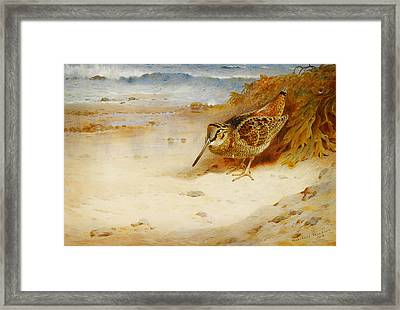 Hungry And Homeless Framed Print by Celestial Images