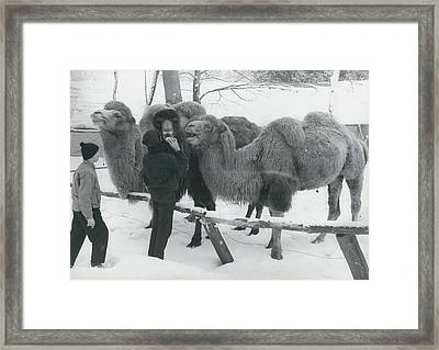 Hungry Animals In The Biggest Private Zoological Gardens Framed Print by Retro Images Archive