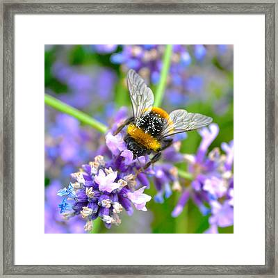 Hungry Bee Framed Print by Tine Nordbred