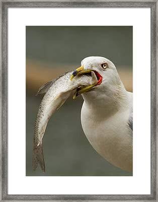 Hungry Bird Framed Print by Mircea Costina Photography