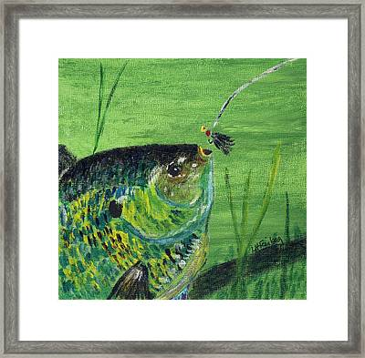 Hungry Bluegill Framed Print