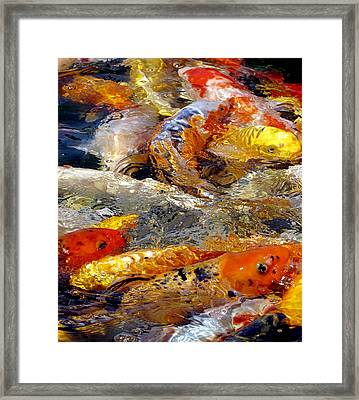 Hungry Koi Framed Print