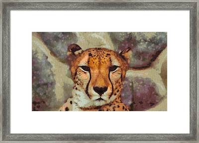 Hungry Cheetah Framed Print by Dan Sproul
