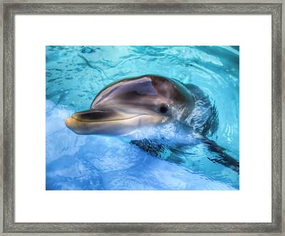 Framed Print featuring the photograph Hungry Dolphin by Tim Stanley