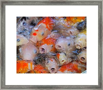Hungry Fish Framed Print by Tonyah Nichols