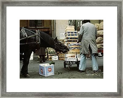 Hungry Horse Framed Print by David Davies