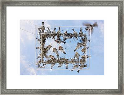 Hungry Little Birds Framed Print by Tim Grams