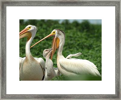 Hungry Framed Print by James Peterson