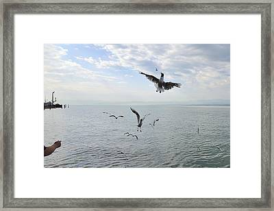 Hungry Seagulls Flying In The Air Framed Print by Matthias Hauser