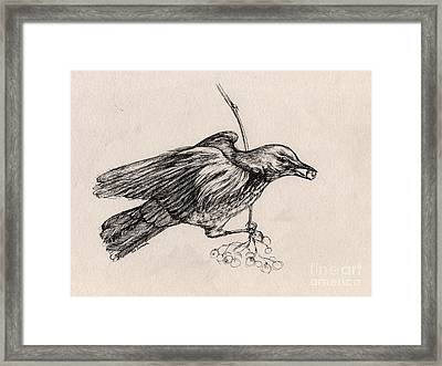 Hungry Thrush 2 Framed Print by Angel  Tarantella