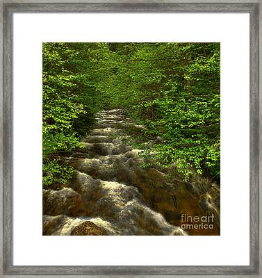 Hunt Creek Foilage Framed Print