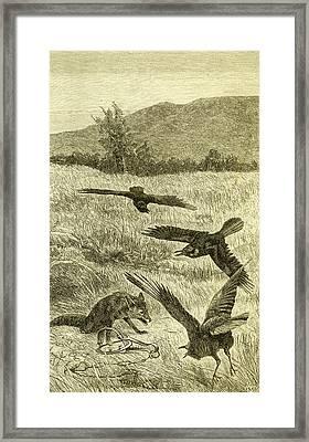 Hunt Fox Austria 1891 Framed Print by Austrian School
