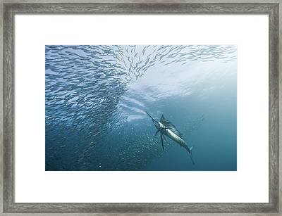 Hunter And The Hunted Framed Print