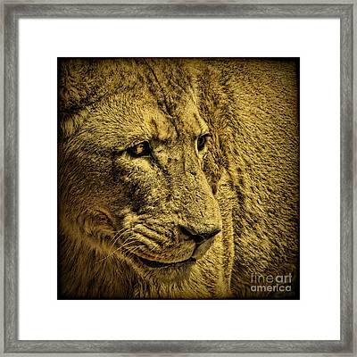 Hunter Framed Print by Andrew Paranavitana