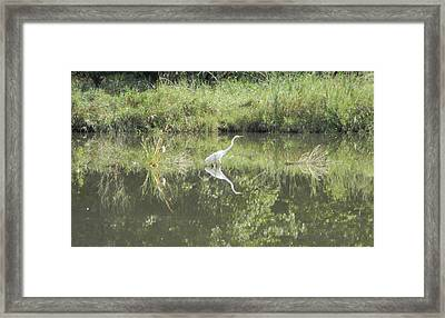 Hunter Reflected 2 Framed Print