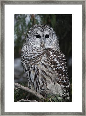 Hunter Framed Print by Sharon Elliott
