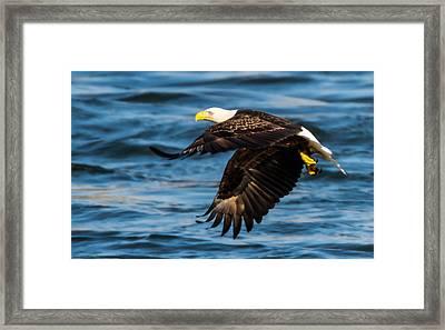 Hunters Eye  Framed Print by Glenn Lawrence