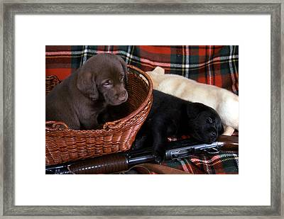 Hunters Puppy Dreams Framed Print by Skip Willits