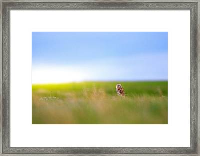 Hunting Alone Framed Print