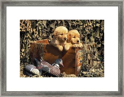 Hunting Buddies - Fs000130 Framed Print by Daniel Dempster