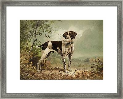 Hunting Dog Circa 1879 Framed Print by Aged Pixel