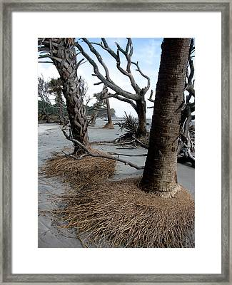 Hunting Island - 4 Framed Print by Ellen Tully