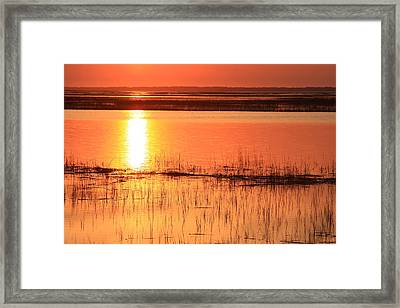 Hunting Island Tidal Marsh Framed Print by Michael Weeks