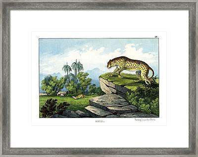 Hunting Leopard Framed Print