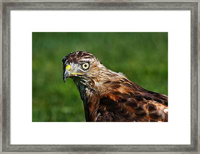 Hunting Framed Print by Mike Farslow