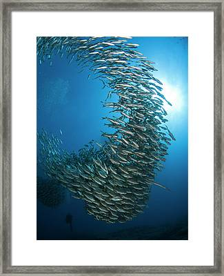 Hurricane Framed Print by A. Martin Uw Photography