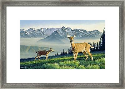 Hurricane Ridge-blacktails Framed Print by Paul Krapf