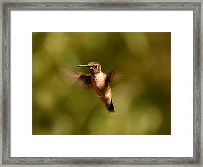 Hurry Up And Take My Picture Framed Print by Lori Tambakis