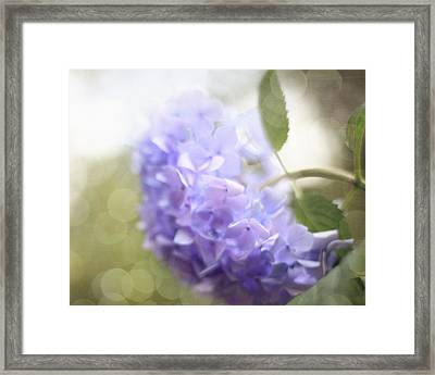 Hush Framed Print by Amy Tyler