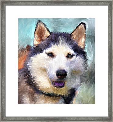Huskies Framed Print by Yury Malkov