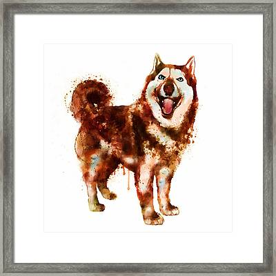 Husky Dog Watercolor Framed Print by Marian Voicu
