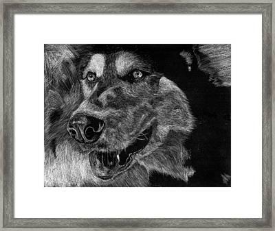Husky Framed Print by Lauren Alexandra