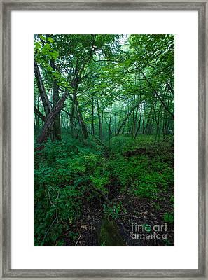 Huth Ravine Framed Print