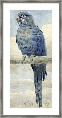 Hyacinthine Macaw Framed Print by Henry Stacey Marks