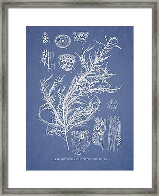Hyalosiphonia Caespitosa Okamura Framed Print by Aged Pixel