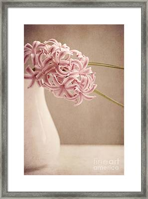 Hyazinth In A Vase Framed Print by Priska Wettstein