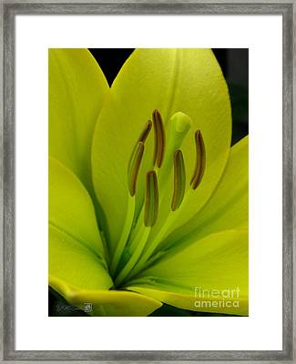 Framed Print featuring the photograph Hybrid Lily Named Trebbiano by J McCombie