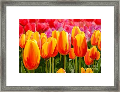 Framed Print featuring the painting Hybrid Tulips by Tim Gilliland