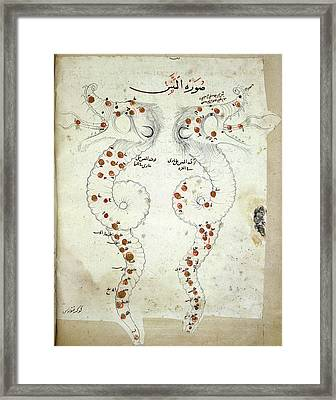 Hydra Constellation Framed Print by British Library