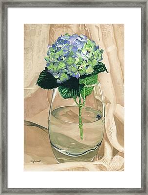 Hydrangea Blossom Framed Print