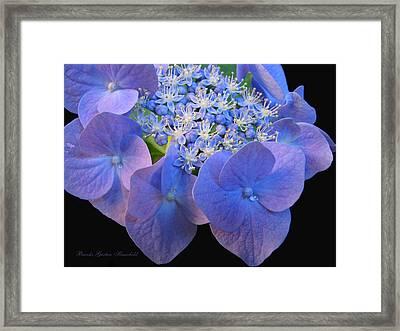 Hydrangea Blossom Macro Framed Print