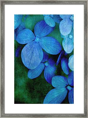 Hydrangea Blues Framed Print by Christine Annas