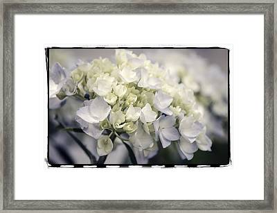 Framed Print featuring the photograph Hydrangea  by Craig Perry-Ollila