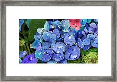 Hydrangea Drift  Framed Print